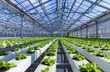 Klimat, woda, nawożenie optymalizacja technologii szklarniowych