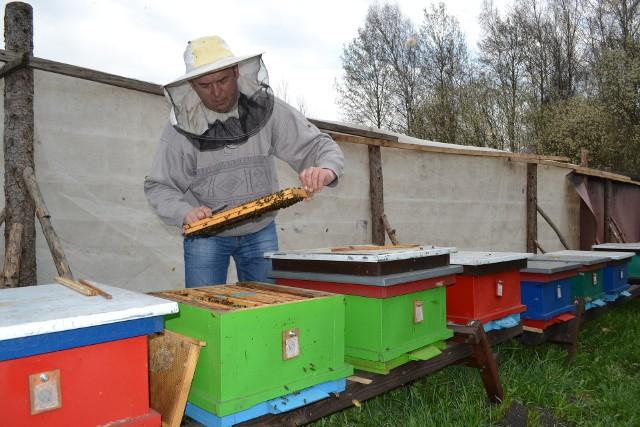 Sławomir Wnuk, pszczelarz z Lniana, na razie tylko posprzątał w ulach po zimie. Na dokładniejsze przeglądy trzeba poczekać
