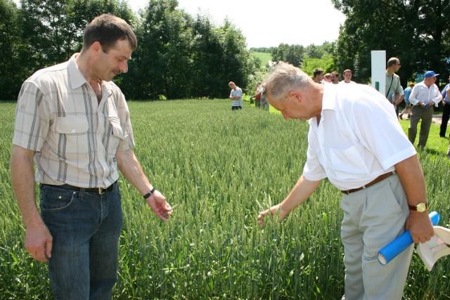 Mieczysław Majcher (po prawej) przez niemal pół wieku był dyrektorem zakładu w Ożansku. Teraz wspólnie ze Stanisławem Lewandowskim oceniają pszenicę jarą. Fot. Roman Kijanka