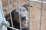 """Gdynia: """"Ciapkowo"""" przyjęło pierwsze psy ze schroniska w Radysach. """"Przeszły piekło"""". Docelowo w schronisku w Gdyni zamieszka 20 zwierząt"""
