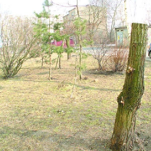 """Drzewa nie trzeba """"pielęgnować"""", ono nie potrzebuje przewietrzania, kształtowania korony. Tym bardziej kiedy dzieje się to w taki sposób jak na zdjęciach."""