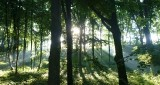 Piękny Gorzów: Park Siemiradzkiego nad ranem (zdjęcia)