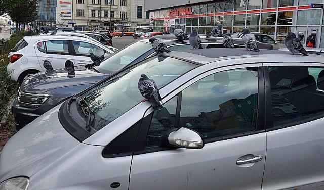 Centrum Łodzi opanowały gołębie.  Jeśli w okolicach Centralu zaparkuje się samochód na kilkanaście minut, to później trzeba jechać prosto do myjni. Innego wyjścia nie ma, bo auto jest zapaskudzone ptasimi odchodami – mówią nam nasi Czytelnicy.CZYTAJ DALEJ NA NASTĘPNYM SLAJDZIE