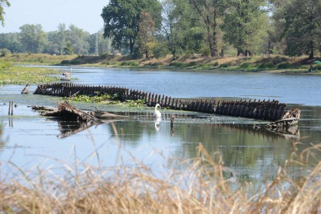 W Piotrkowie Kuj. chcą oszacowania szkód przez komisję na wszystkich kategoriach gleb oraz dotyczących wszystkich upraw.