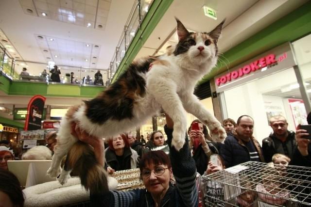 Wystawa kotów w Galerii Łódzkiej