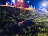 Wypadek w Dobrzyniewie Dużym. Potrącenie łosia na DK 65 (zdjęcia)