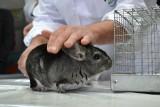 Fermy zwierząt futerkowych pozostają w zawieszeniu. Nie wszystkie przetrwały trudny 2020 rok