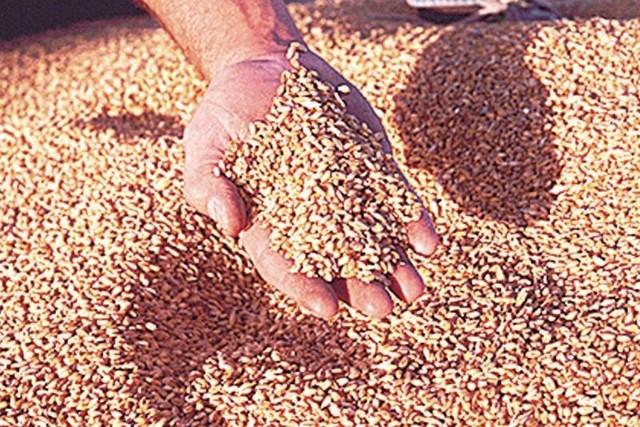 Ponad 65 proc. rolników wysiewających kwalifikowany materiał siewny, korzysta z dopłat do niego