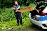 Mała sarna utknęła w ogrodzeniu w centrum Nowej Soli. Z policyjnego bagażnika wyskoczyła prosto do lasu!