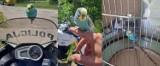 """Papuga """"kontrolowała"""" jarosławskich policjantów [ZDJĘCIA]"""