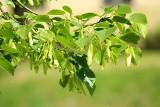 """Klony, buki, lipy. Akcja sadzenia """"1000 drzew"""" w Lublinie wchodzi do kolejnych dzielnic. Gdzie pojawią się rośliny?"""