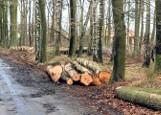 Padły drzewa pod S6 w Budzistowie pod Kołobrzegiem
