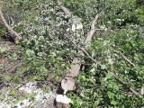 Sady Antoniukowskie bez sadów. Według władz miasta spółdzielnia Rodzina Kolejowa nielegalnie wycięła drzewa. Będą kary