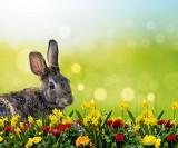 ŻYCZENIA WIELKANOCNE - najpiękniejsze, święte i poważne życzenia na Wielkanoc 2018 [DUŻY WYBÓR ŻYCZEŃ]