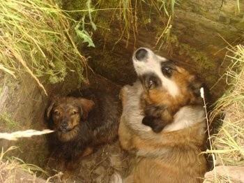 Te psy miały szczęście, bo trafiły na ludzi, którzy uwolnili je z pułapki i zapewnili opiekę
