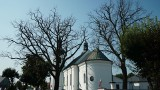 Przy parafii w Bielsku Podlaskim usechł ponad 200-letni dąb - pomnik przyrody. Sprawą zajmuje się policja