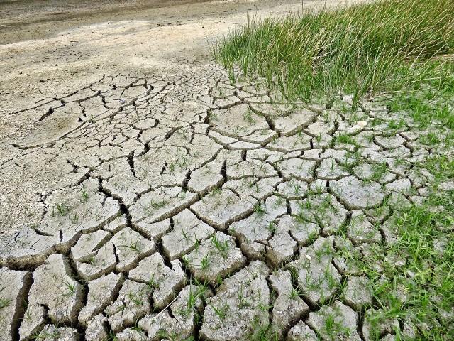 Po trzeciej z rzędu bezśnieżnej zimie opadów było jak na lekarstwo. Według Instytutu Meteorologii i Gospodarki Wodnej przełom 2019 i 2020 roku był najcieplejszy od początku prowadzenia pomiarów hydrologicznych w Polsce. Widmo suszy większej od choćby tej ubiegłorocznej jest bardzo realne.CZYTAJ DALEJ NA NASTĘPNYM SLAJDZIE