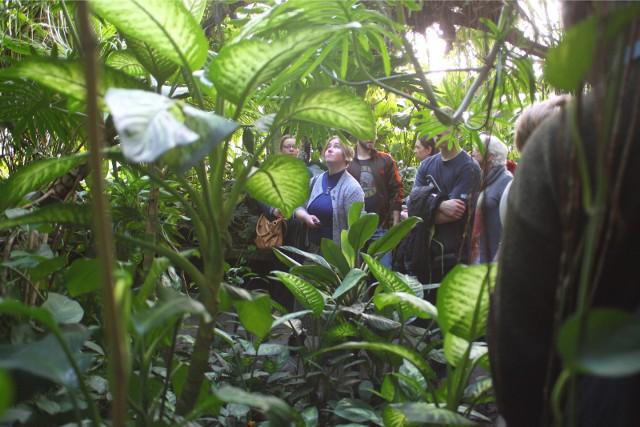 Palmiarnia Poznańska otwiera się na noc. Zwiedzający mogą nocą poznać uroki przechadzek wśród roślin. Wycieczkę uświetni występ artystyczny.