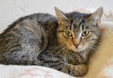 Koty szukają domu. Radzio i Dakota do adopcji [ZDJĘCIA]