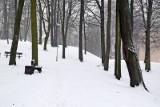 Zielona Góra. Choć stary, zniszczony, w bieli wygląda uroczo. Park Tysiąclecia w zimowej odsłonie zadziwia