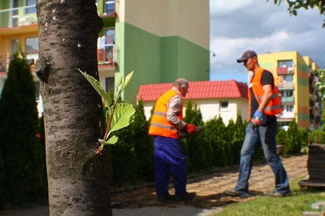 Faktycznie, w związku z przebudową ulicy konieczne będzie wycięcie około 40 drzewek - informuje Ewa Batko, rzecznik prasowy urzędu miasta. - Ale tuż po zakończeniu inwestycji nasadzone zostaną nowe rośliny - uspokaja.
