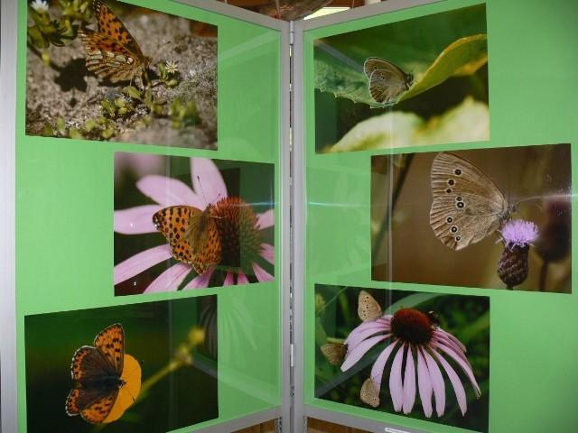 Motyle w Centrum Natura 2000 prezentują się wyjątkowo.