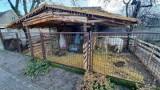 Szopka bożenarodzeniowa z żywymi zwierzętami we wsi Szewce koło Buku. Pan Robert zbudował ją obok swojego domu