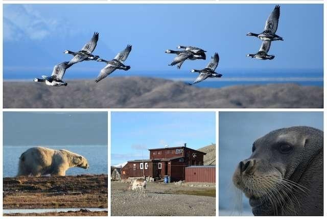 Ze Stacji Polarnej UMK na Spitsbergenie do najbliższego skupiska ludzi w linii prostej jest około 50 km.