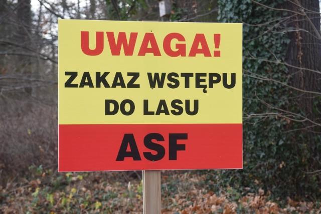 Służby stawiają trzeci płot w województwie wolsztyńskim, gdzie padłych zwierząt było najwięcej.