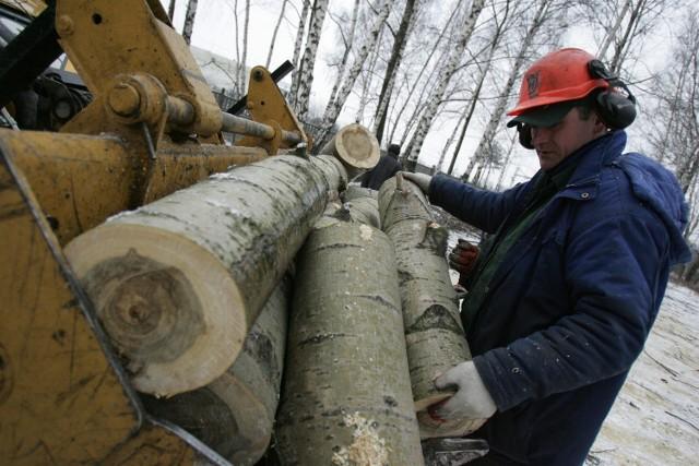 Wycinka drzew nad brzegami jeziora potrwa do końca lutego. Zajmuje się nią  spółka OFI, dbająca w całym mieście o zieleń