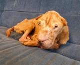 Właściciel Bobika usłyszał zarzut znęcania się nad zwierzęciem! Grozi mu do 5 lat więzienia