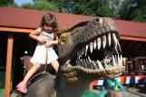 TOP 15 najlepszych atrakcji dla rodzin z dziećmi w Polsce. Zobacz ranking, gdzie warto pojechać [ZDJĘCIA] AKTUALIZACJA  [18.08.2021]