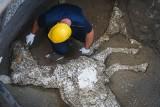 Ciało konia w idealnym stanie odnalezione w Pompejach. Zginął po erupcji Wezuwiusza w 79 roku