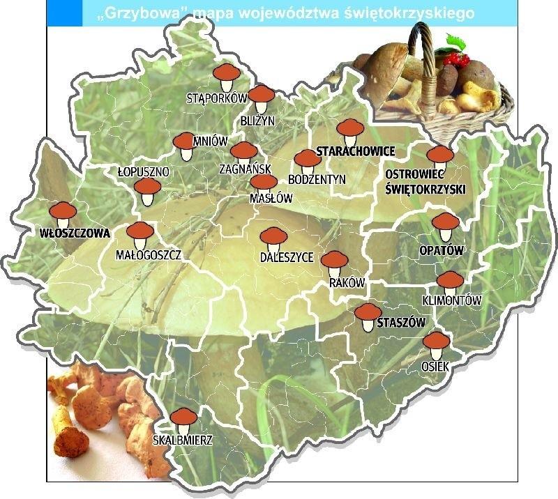 Zobacz Grzybowa Mape Swietokrzyskiego Tam Lasy Pelne Sa Grzybow