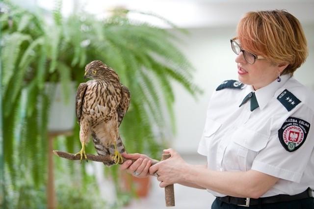 Szkolenie dla funkcjonariuszy i pracowników KAS rozpoczeło się w Ośrodku Rehabilitacji Zwierząt Chronionych w Przemyślu.