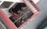 Właściciele katowali psa i zamykali go na rozgrzanym balkonie nawet na kilkanaście godzin. Do tego szczeniak był bity i głodzony