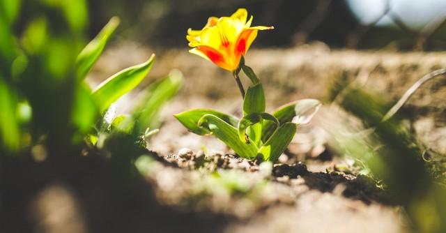 Wiosna pojawiła się w tym roku bardzo wcześnie. Jej oznak nie brakuje za naszymi oknami. Zauroczeni pogodą i aurą, poprosiliśmy naszych czytelników na Facebooku o wiosenne zdjęcia ich autorstwa. Otrzymaliśmy prawie 100 fotografii, z których zdecydowana większość bardzo nam się spodobała. Wystarczy rzucić na nie okiem, żeby poczuć wiosnę! Zebraliśmy kilkadziesiąt waszych zdjęć wiosny i stworzyliśmy galerię, która wszystkim poprawi nastrój i wprowadzi wiosnę do często szarej codzienności. Zobaczcie budzącą się do życia przyrodę oczami czytelników nto.pl.