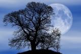 Księżyc Żniwiarzy 2019 - co to jest, kiedy oglądać? Przed nami Pełnia Żniwiarzy czyli wyjątkowa Pełnia Księżyca!