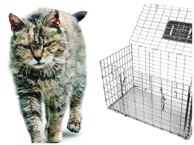 """Bydgoskie schronisko wypożycza """"samołapki"""" na bezdomne koty, ale nie sprawdza, co się ze zwierzętami później dzieje."""