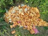 """Góra zepsutych serów porzuconych w lesie pod Orelcem w Bieszczadach. Dzikie wysypisko """"oscypków"""" było śmiertelnie niebezpieczne dla zwierząt"""