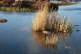 24-letni mieszkaniec powiatu złotowskiego wybrał się pokłusować na jezioro Konieczno