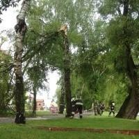 Ełccy strażacy musieli ściąć brzozę nad jeziorem, ktora złamał porywisty wiatr