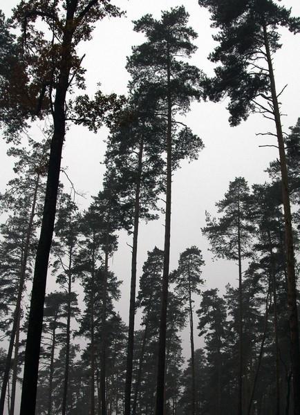 70-latkę odnaleziono w lesie.