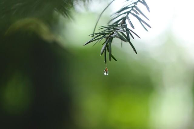 Do 5 tys. zł będzie można dostać z kasy ratusza na budowę systemu do zatrzymywania wody deszczowej