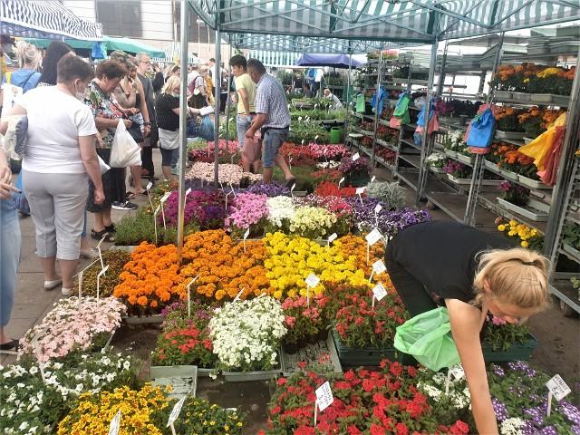 Na łódzkich targowiskach jest duży wybór roślin do ogrodu i na balkon. Na kolejnych slajdach pokazujemy co i za ile można kupić. Warto porównać ceny