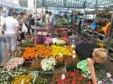 Krzewy, byliny, zioła i kwiaty do ogrodu. Sprawdź CENY na łódzkim targowisku