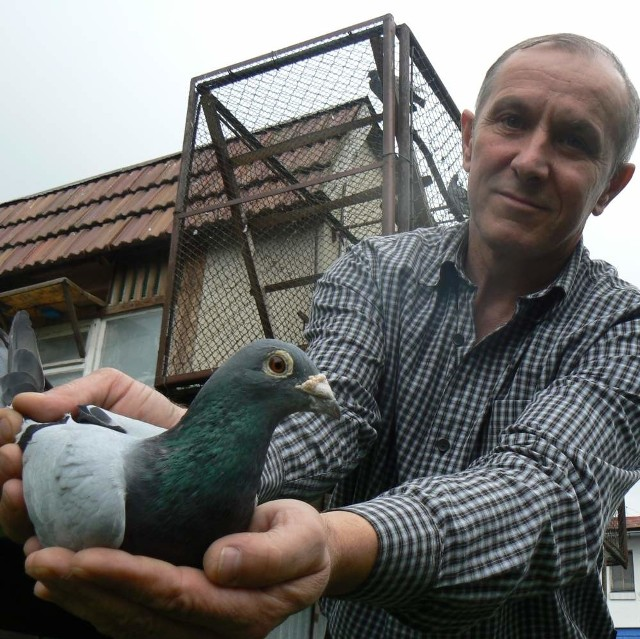 Ptak pokonał liczącą 1071 kilometrów trasę do swojego gołębnika w rekordowym tempie 2067 metrów na minutę.