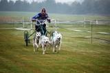 Wyścigi psich zaprzęgów w Minikowie już w najbliższy weekend. Warto przyjechać!
