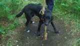 Nowosolanin skazał swojego psa na śmierć. Na szczęście przez las szedł spacerowicz, który o wszystkim  powiadomił straż miejską w Nowej Soli