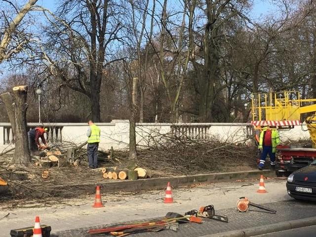 Pod koniec lutego wycięto cztery dorodne drzewa przed wejściem do parku Wilsona w Poznaniu - od ul. Głogowskiej.Przejdź do kolejnego zdjęcia --->
